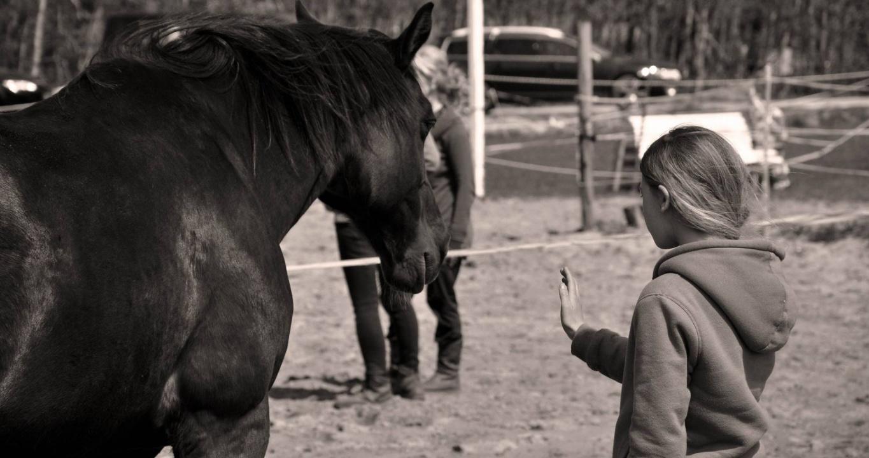 Coachen met paarden alkmaar