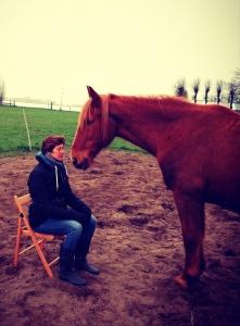 Coachen met paarden Alkmaar en omgeving