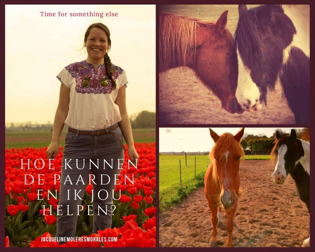 coaching Alkmaar coachen met paarden